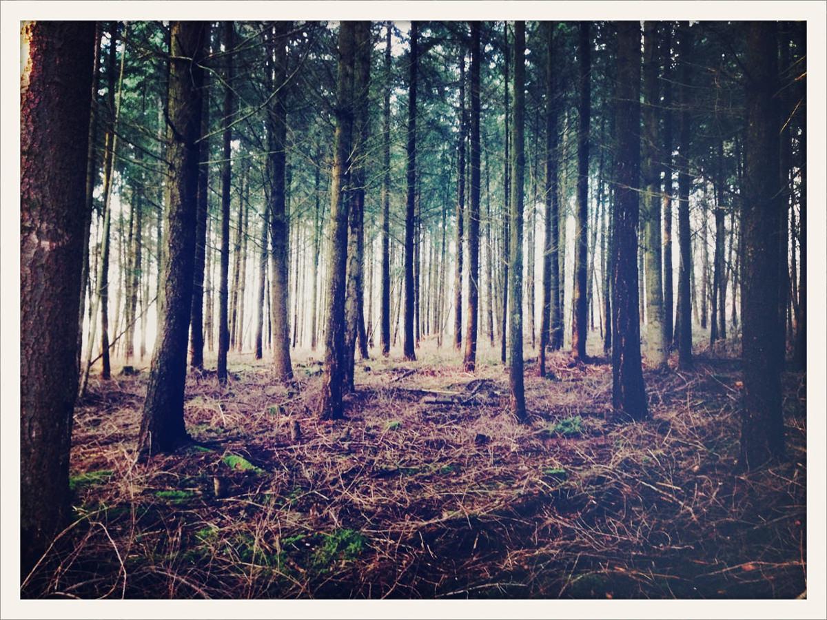 iPhone Geknipse - Wald