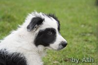 kleine Zuschauerin Daisy/kleiner Waschbär