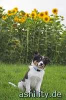 Sonnenschein mit Sonnenblumen