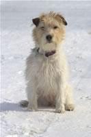 Ash im Schnee sitzend