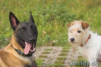 Diox und Ash