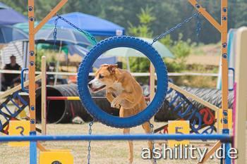 Agility Turnier