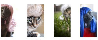 zu Katzen-Perücken