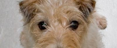 Was sagt uns dieser Blick?