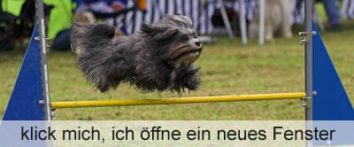 zur Agility Turnier Slideshow
