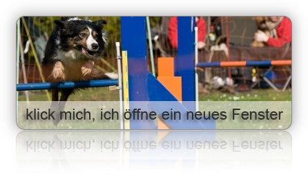 3. Agility WM Quali 08 - Slideshow