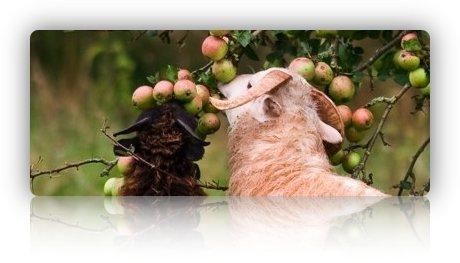 Lecker, lecker - Apfelbaumblätter