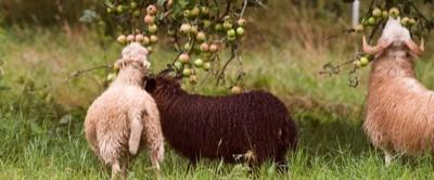 hmmmm, Apfelbaumblätter