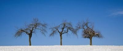 Die Drei - Winter - Sonn