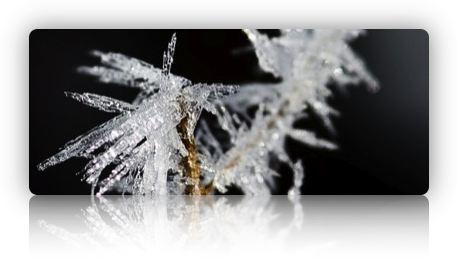 Frostig 2