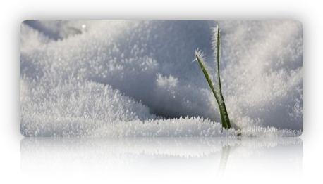 Frostig 3