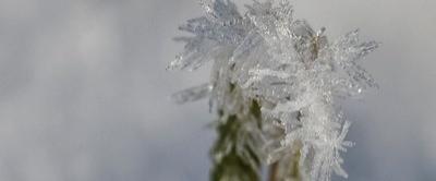 Frostig 1