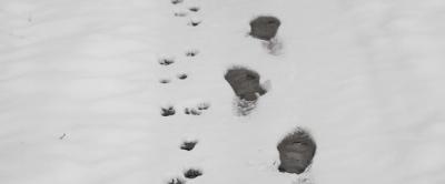Zwei Spuren im Schnee.