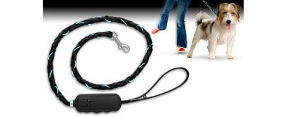 zu Dogside Light Up Lead