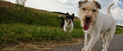 reumütig sein + Terrier vorschicken