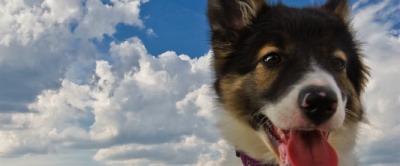 Lia und der Himmel