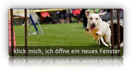 Agility Turnier beim VSGH Reutlingen-Betzingen - Slideshow