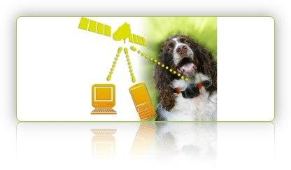 1dps-dog positioning system