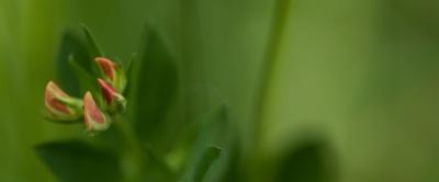 Blumen Makro - Schönheiten von nebenan