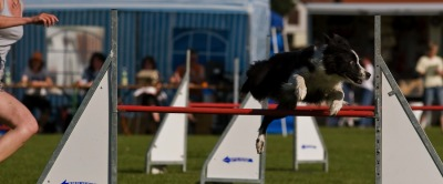 3 Tages Agility Turnier in Steppach