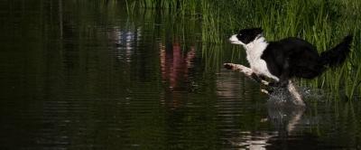 Dfini beim Versuch übers Wasser zu laufen