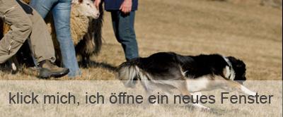 Junghunde Seminar Slideshow - Sonntag