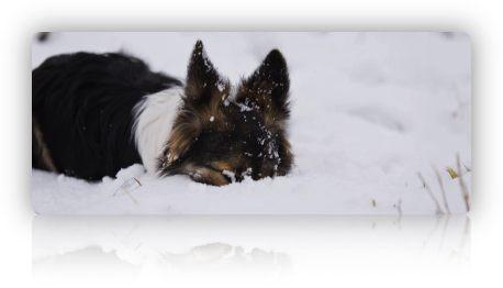 erster Schnee (2)