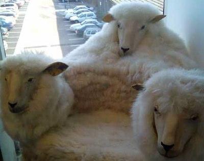 Für Schafverrückte oder Wikinger
