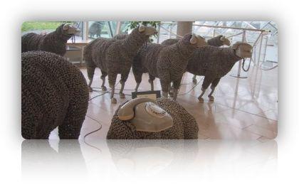 kommunikative Schafe