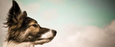 zwei Himmelhunde