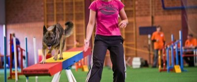3. Agility WM Qualifikation 2009 in Kappeln - Wippe