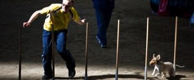Fotos der 1. Agility WM Qualifikation 2009 - Teil 2