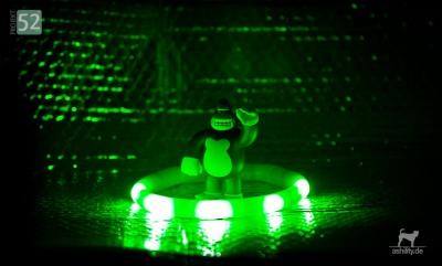Projekt 52/5: Die Farbe Grün