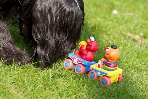 Ernie und Elmo