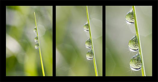 drei Tropfen Triptychon