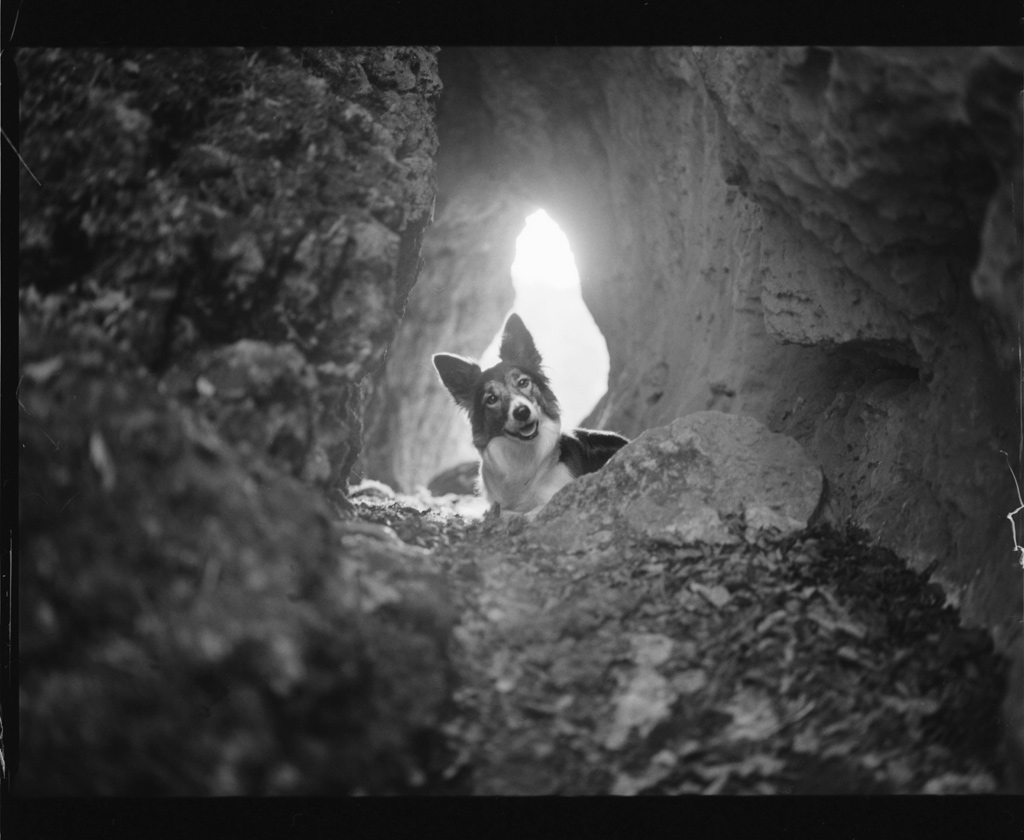 Höhlenhund