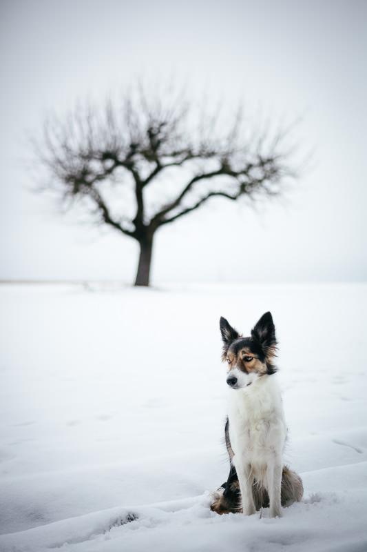 Hund, Schnee, Baum