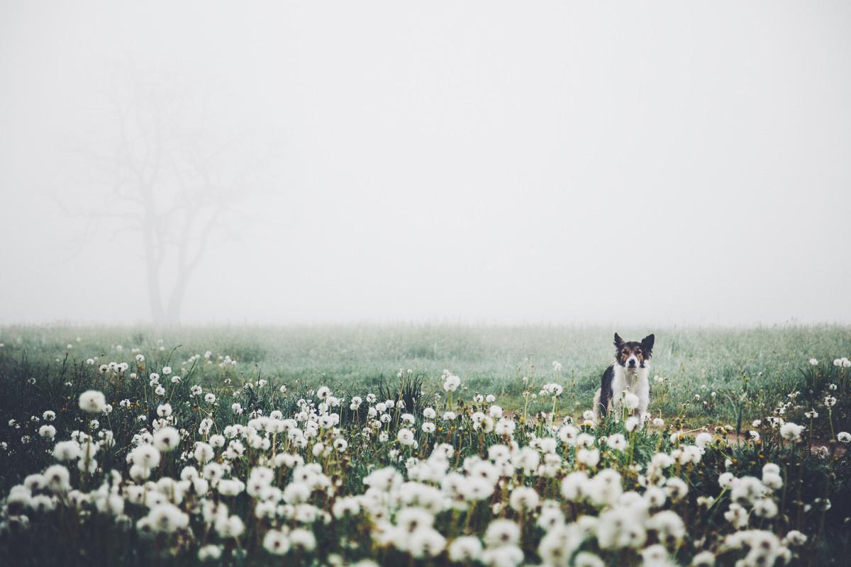 Frühling im Nebel